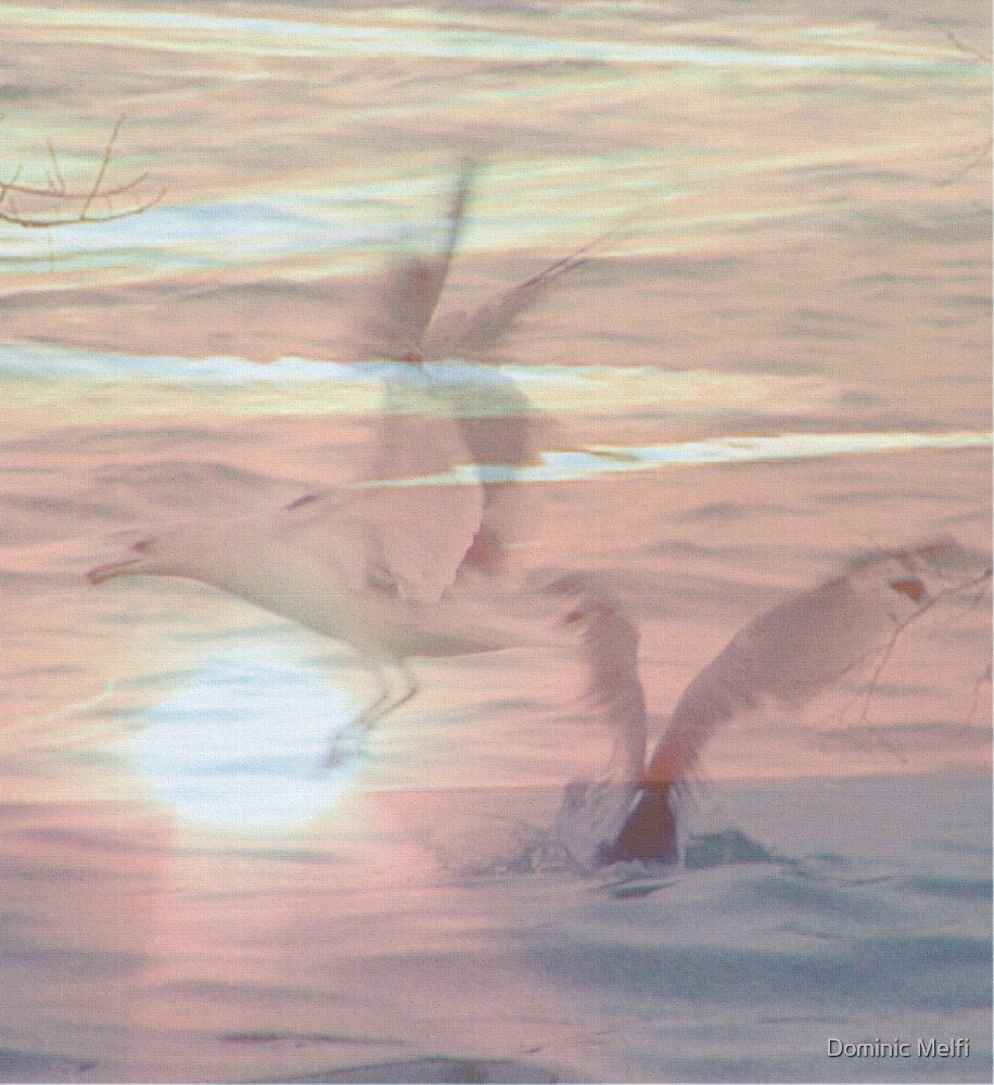 Spirit Gulls by Dominic Melfi