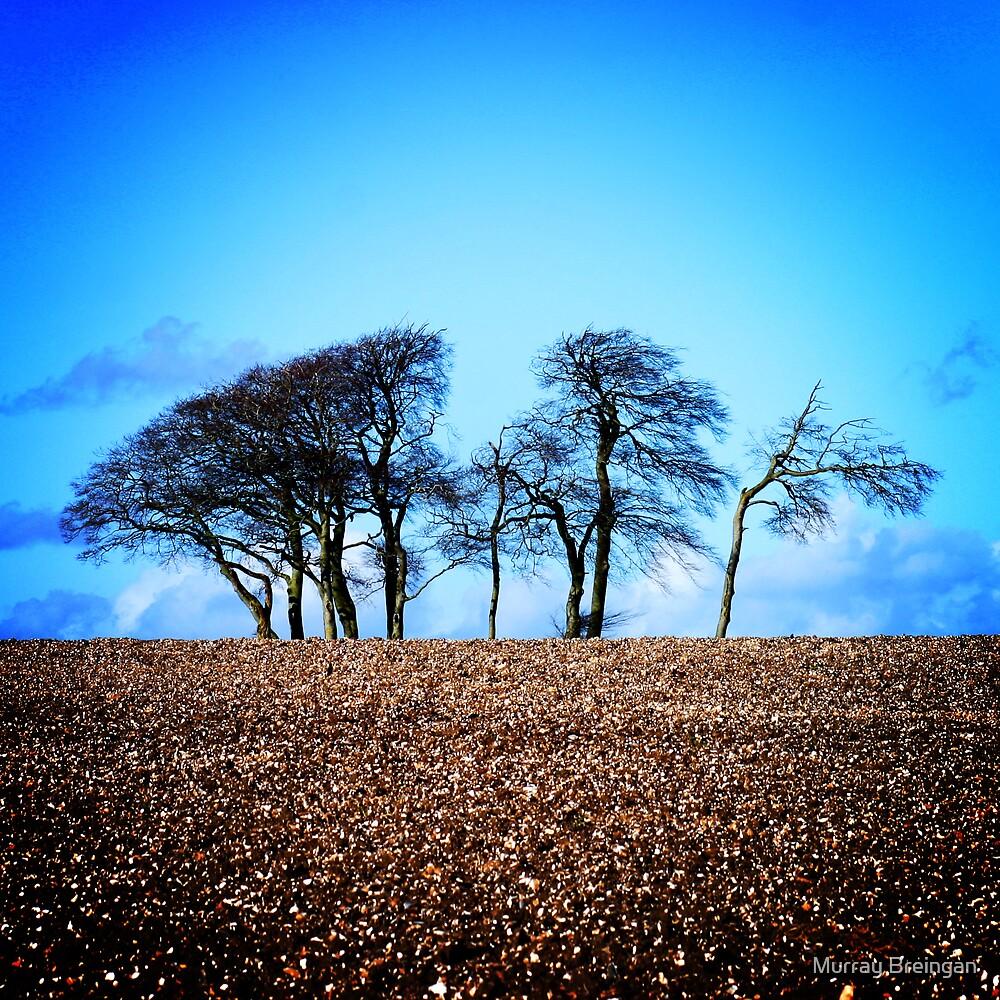 Salisbury Plain Wiltshire by Murray Breingan