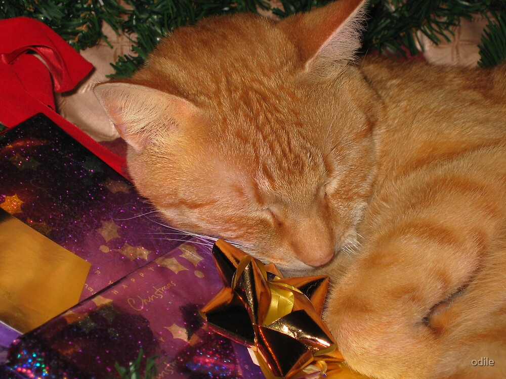 christmas sleep by odile