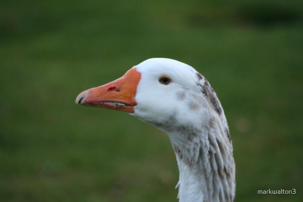 Goose by markwalton3
