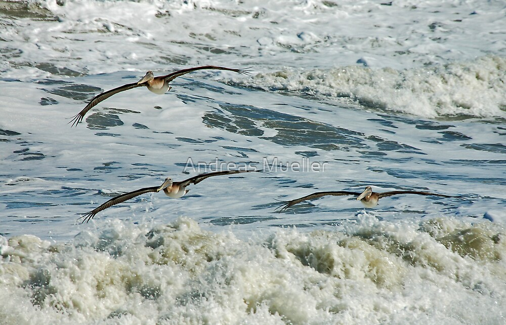 The Pelican Brief by Andreas Mueller