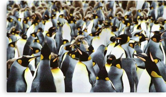 Penguin Power by Steve Bulford