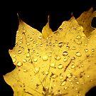 brisk autumn rain by Andrew Hoisington