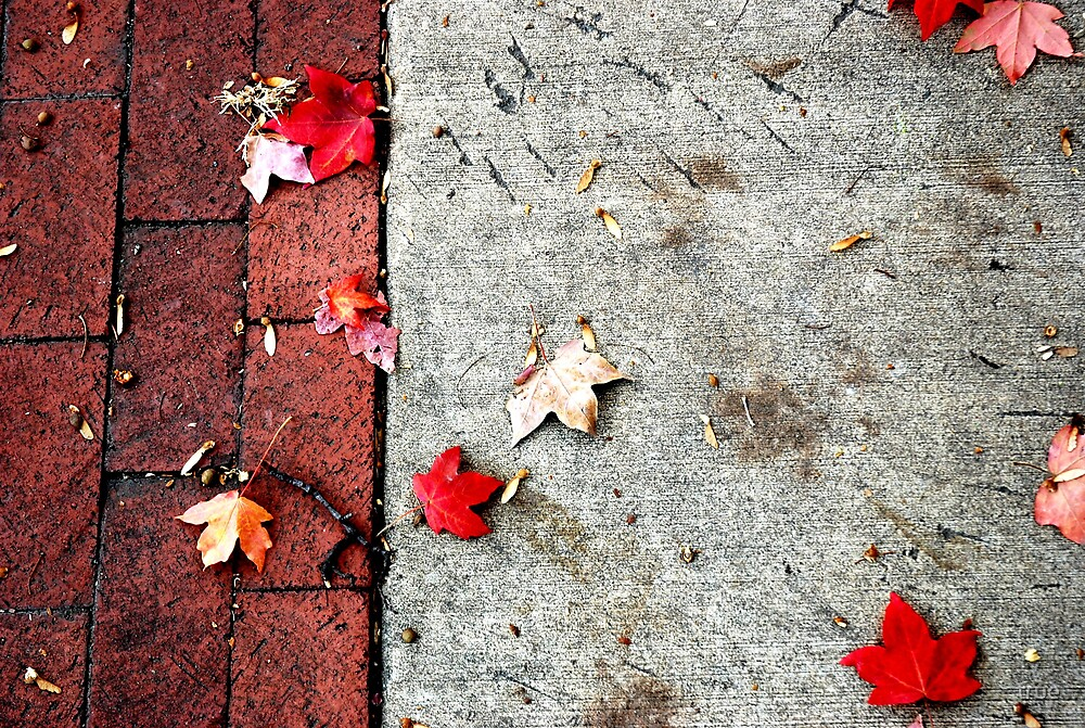 autumn sidewalk by true