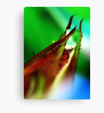 aphid and drop Canvas Print