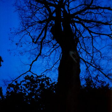 tree at dusk by as2ae