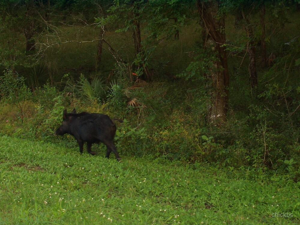 Wild Pigs by chickbs