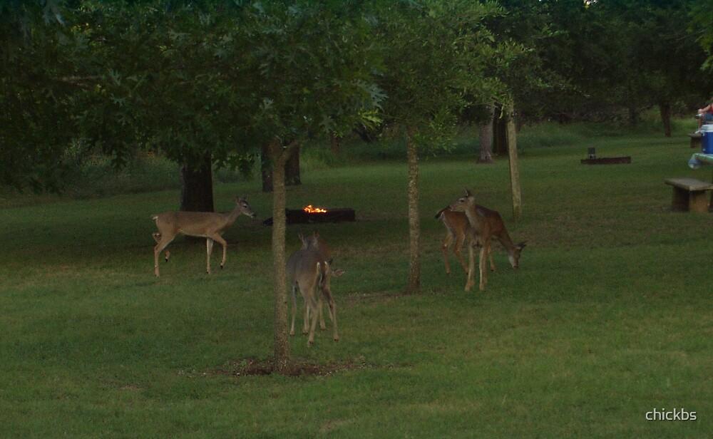 Deer in TX by chickbs