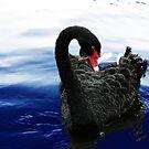 Swan Lake by RoughDiamond