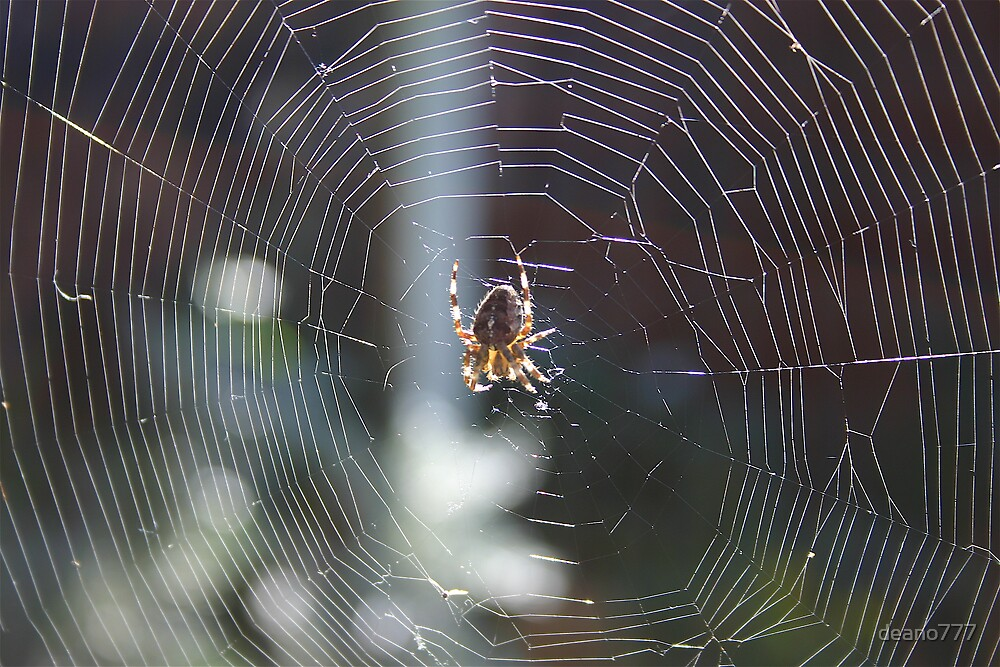 spider on web by deano777