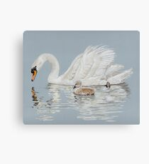 Swan and Cygnet Reflections Canvas Print