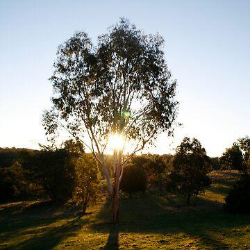 Sunset Tree-Kny Farm by fourstar82