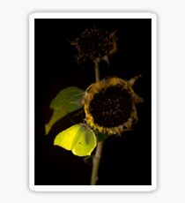 Impression with dried sunflower Sticker
