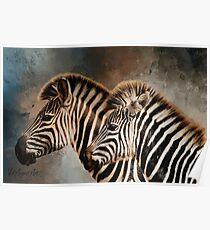Plains Zebras Poster
