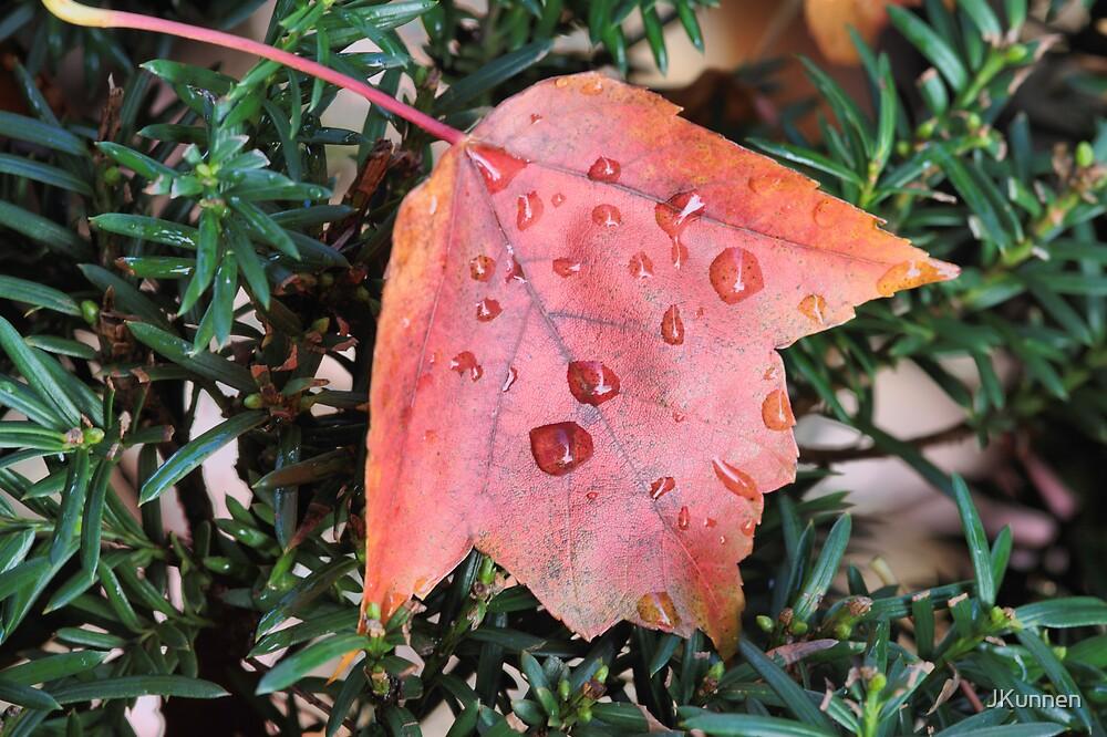 Wet maple Leaf by JKunnen