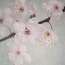 Blossom by Jill Ferry