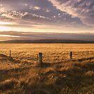 Ida Valley by Jill Ferry