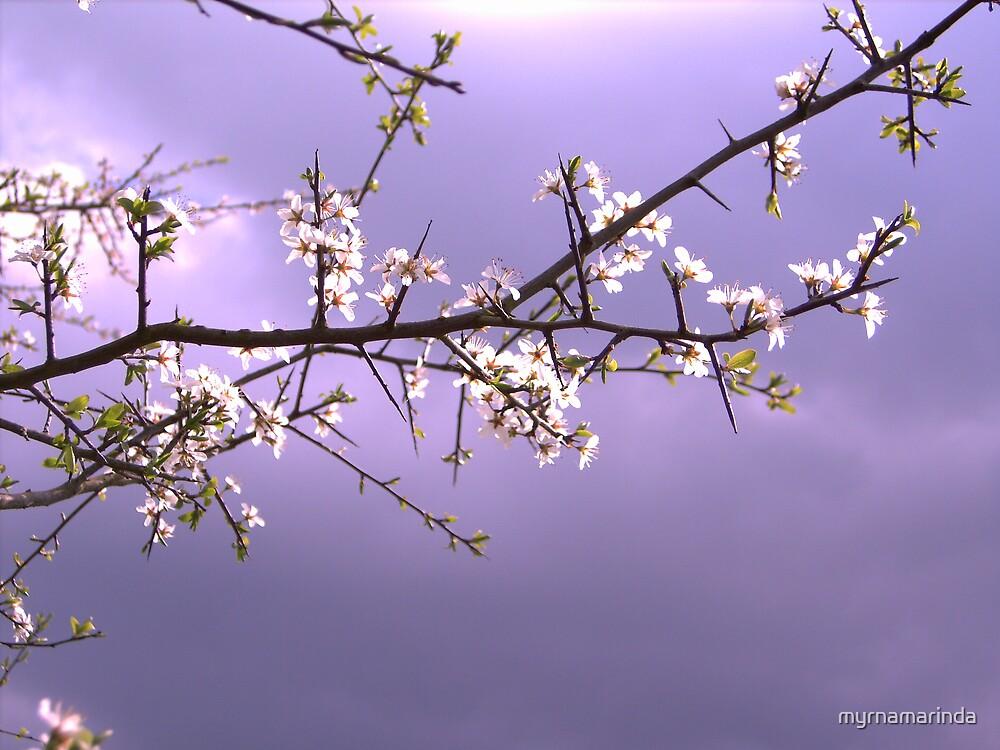 Brilliant sky by myrnamarinda