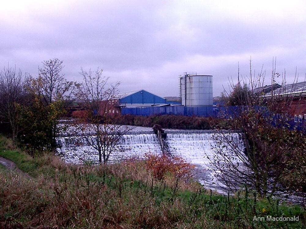 Riverside view by Ann Macdonald