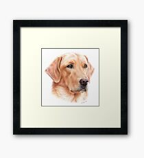 Labrador Colored Pencil Drawing Framed Print
