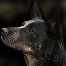 Blue Dog by Nicmutt