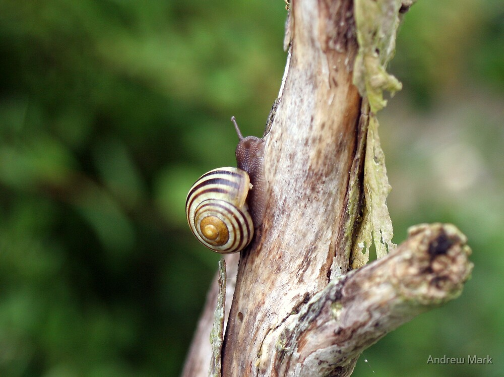 Swirls of the Snail by Andrew Mark