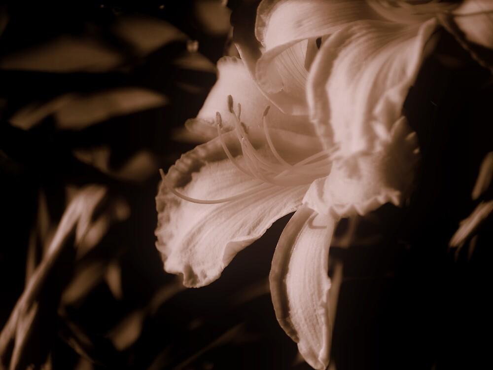 Delicate Beauty by Carole Rogers