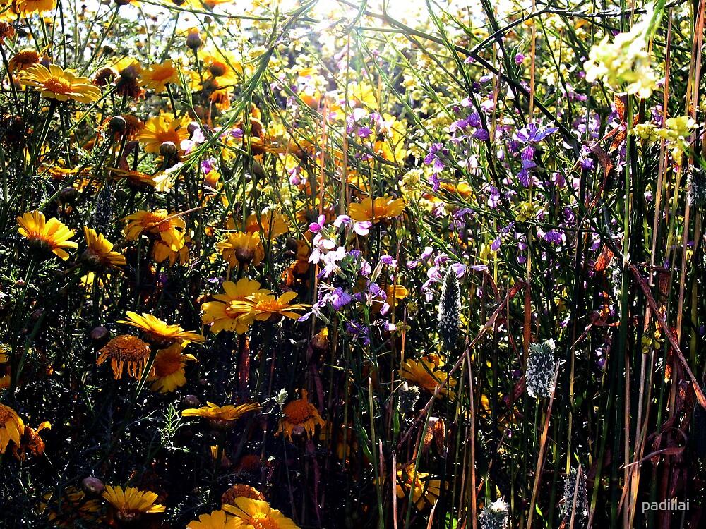 Sunflower Landscape by padillai