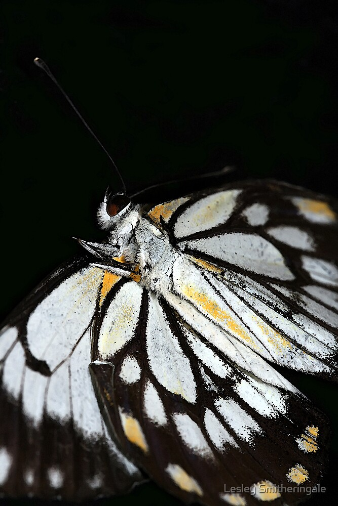 Butterfly Ball by Lesley Smitheringale