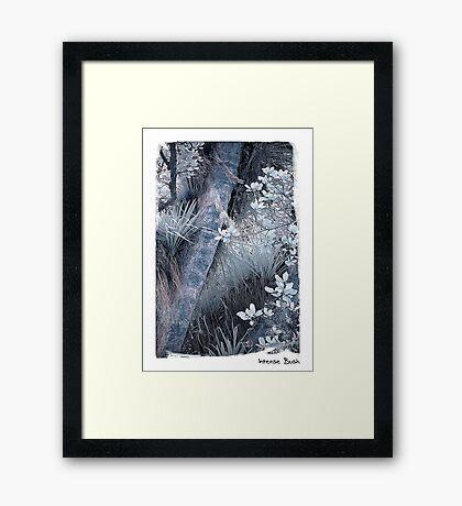 Intense Bush Framed Print