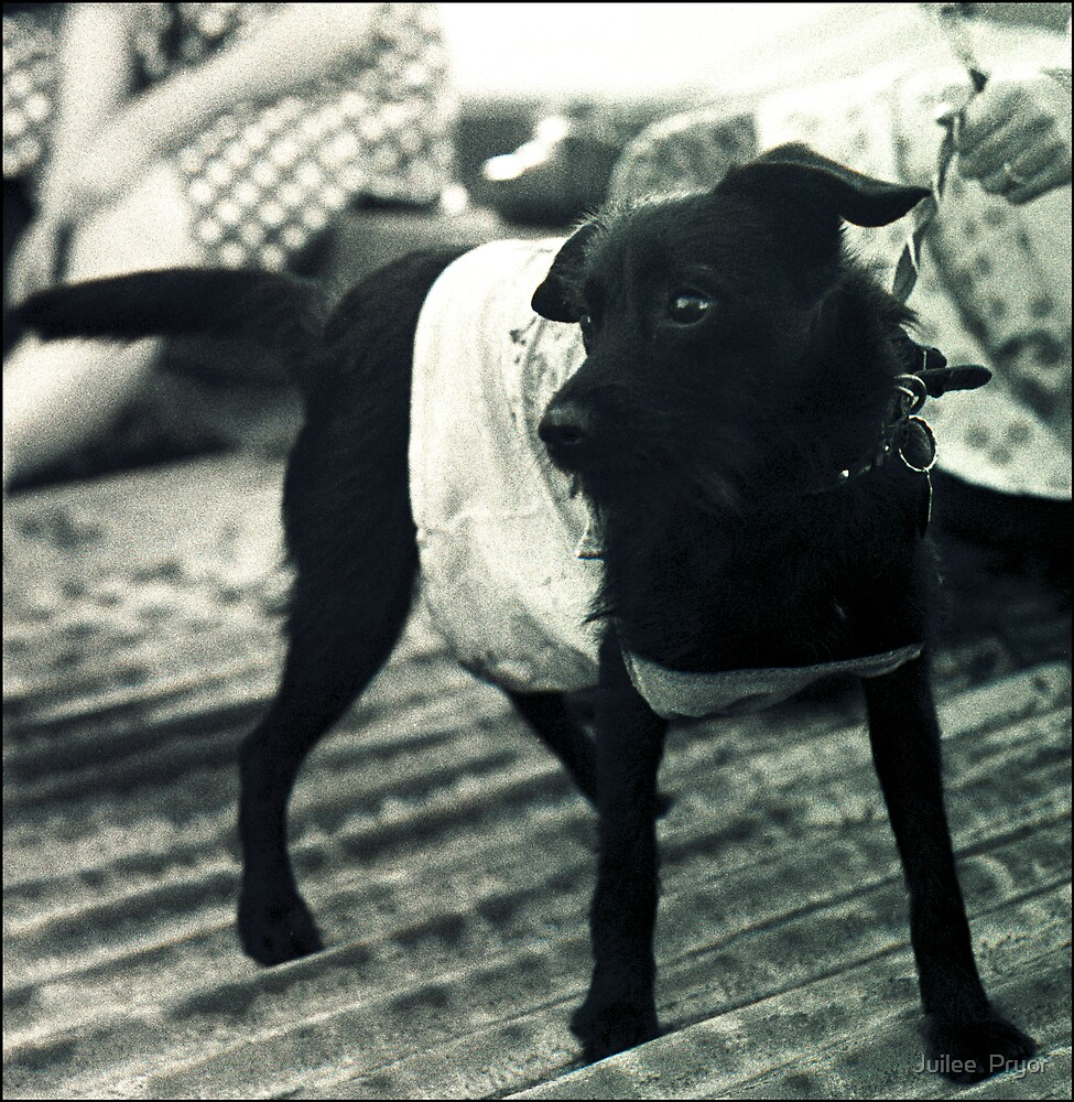 little punk dog by Juilee  Pryor