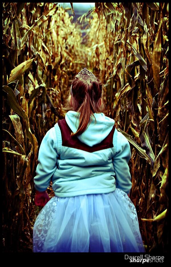 Walking in the Fields by Darrell Sharpe