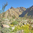 Anza Borrego Desert by Patty Lewis