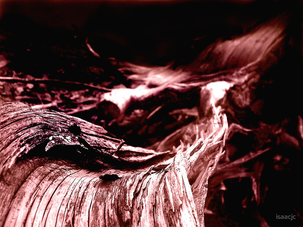 picture of wood by isaacjc