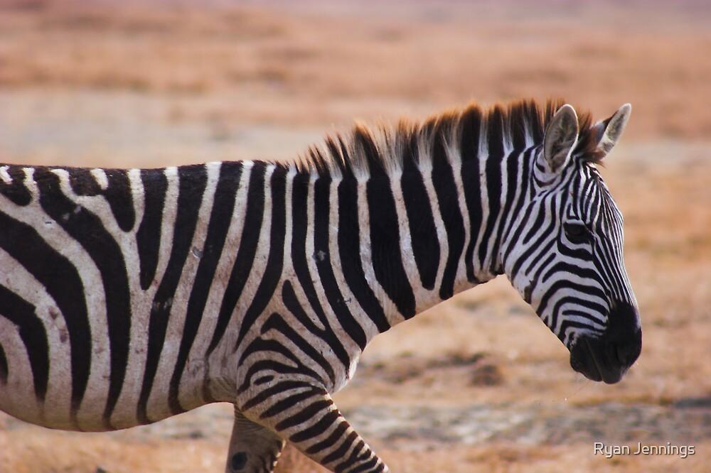 Zebra Crossing by Ryan Jennings