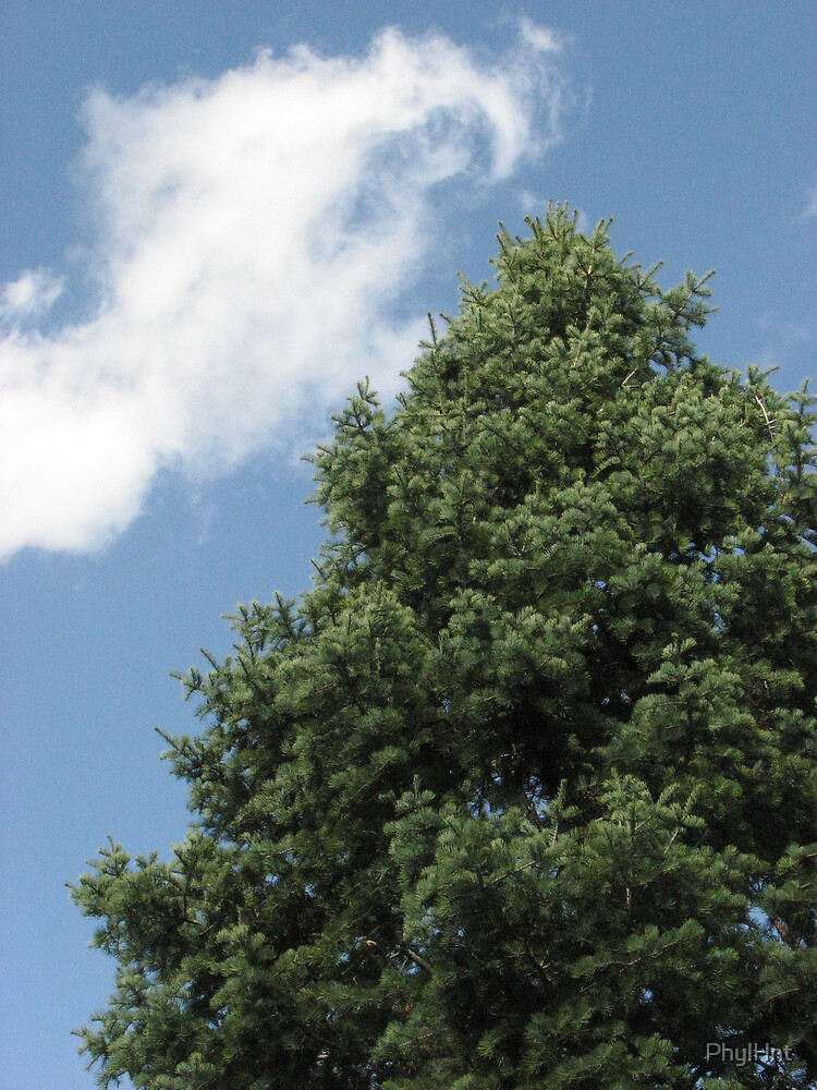 Tree in Blue Sky by PhylHnt