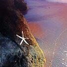 Seashore Dreaming by BethBernier