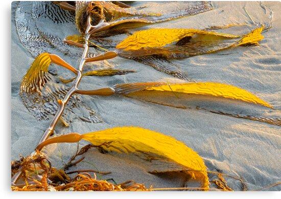 Golden Seaweed and Sunset.  Bacara Beach, Goleta, California by Eyal Nahmias