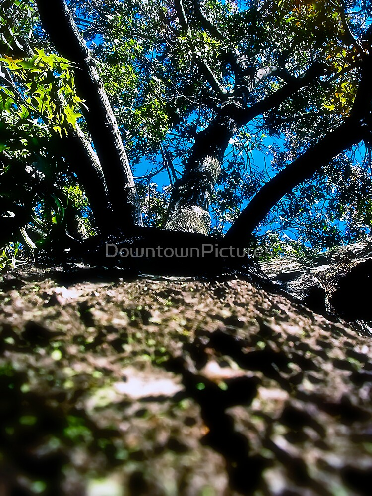 A Tree Grows On My World by DowntownPictures