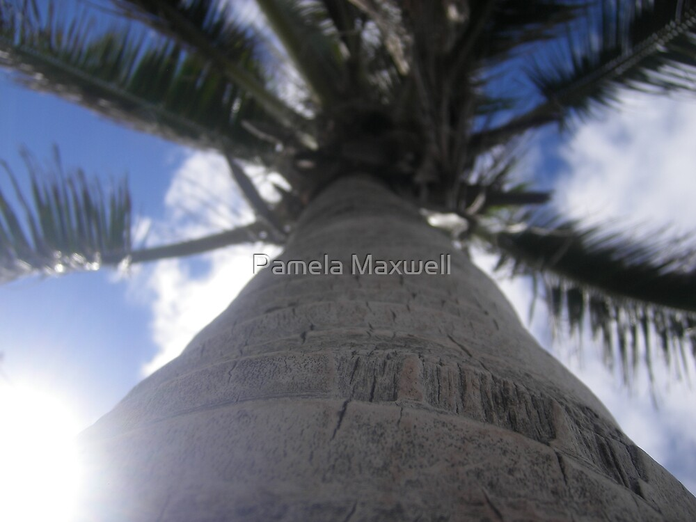 Palm in the Sky by Pamela Maxwell