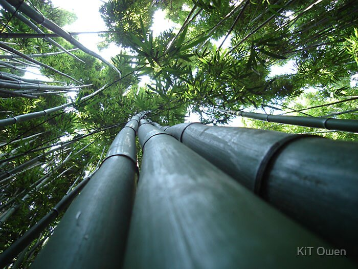 bamboo by KiT Owen
