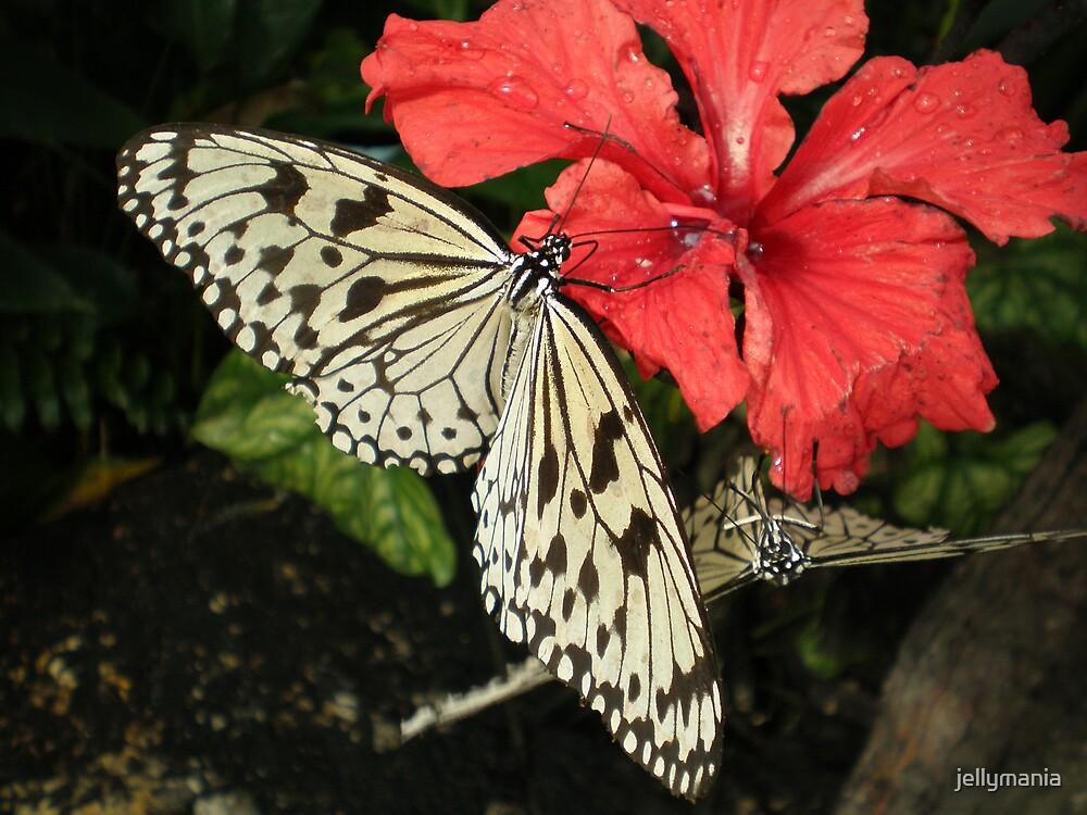 Butterfly beauty by jellymania