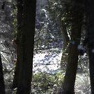 snowy Oregon forest 6 by Dawna Morton