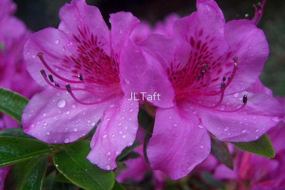 Love Thy Plants by JLTaft