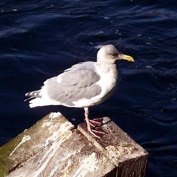 Seagull by birdinsun