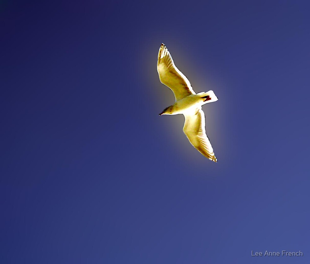 Seagull by Lee Anne French