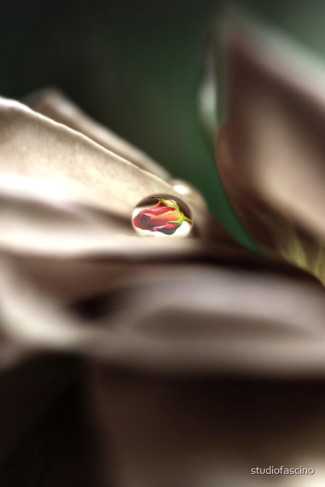 rose in drop by studiofascino