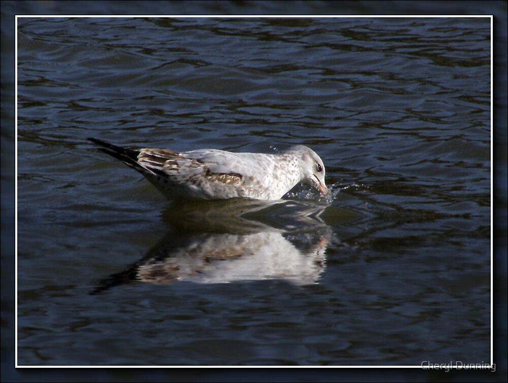 reflected seagull 2 by Cheryl Dunning