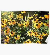 Black-eyed Susan Yellow Flowers Poster