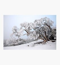 Snowbound Snowgum, Mt Feathertop, Australia Photographic Print